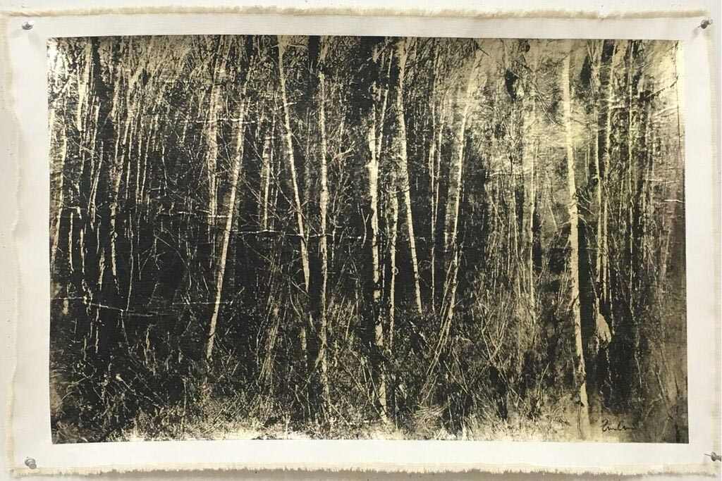 Bill Claps - Birch Grove, Negative